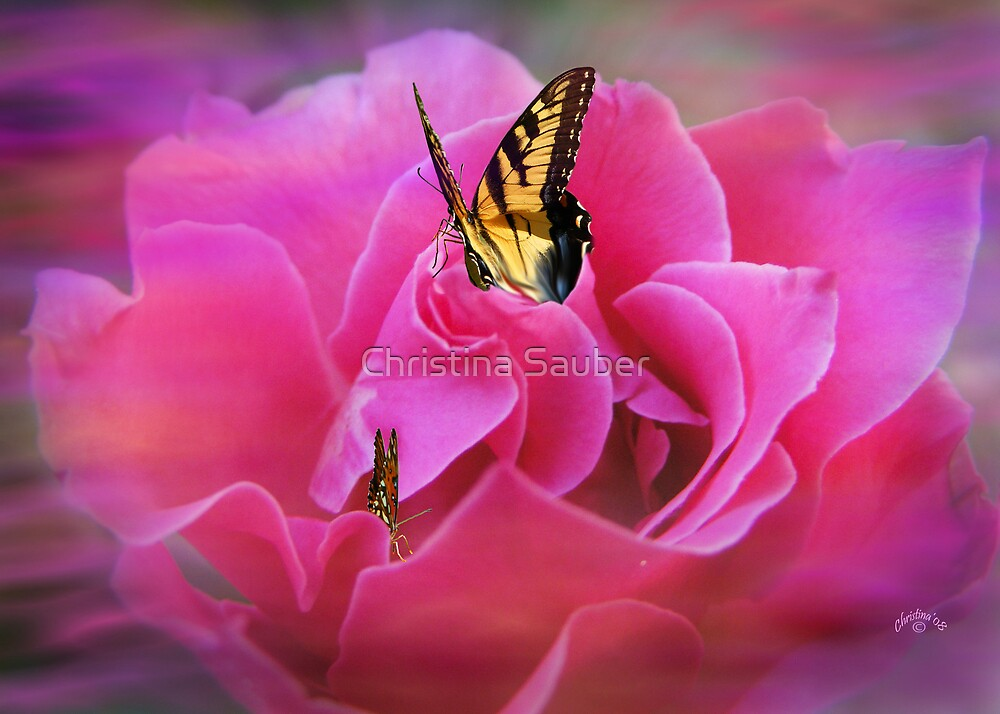 The Beauty Within by Christina Sauber