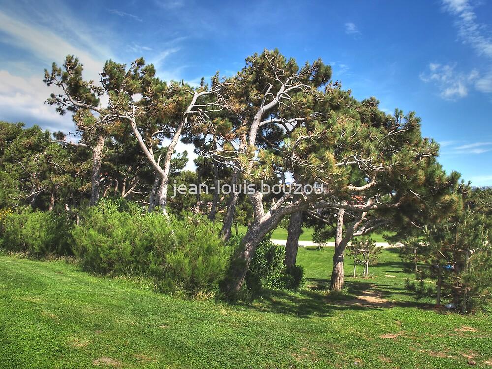 pines on the coast by jean-louis bouzou
