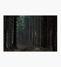 clearing, kirkhill forest Photographic Print