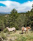 Horses in Paradise by Jan Cartwright
