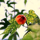 A Beaut Of An Abutilon by Michael May