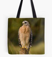 Red Shouldered hawk Tote Bag