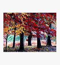 Simple Forest Scene Photographic Print