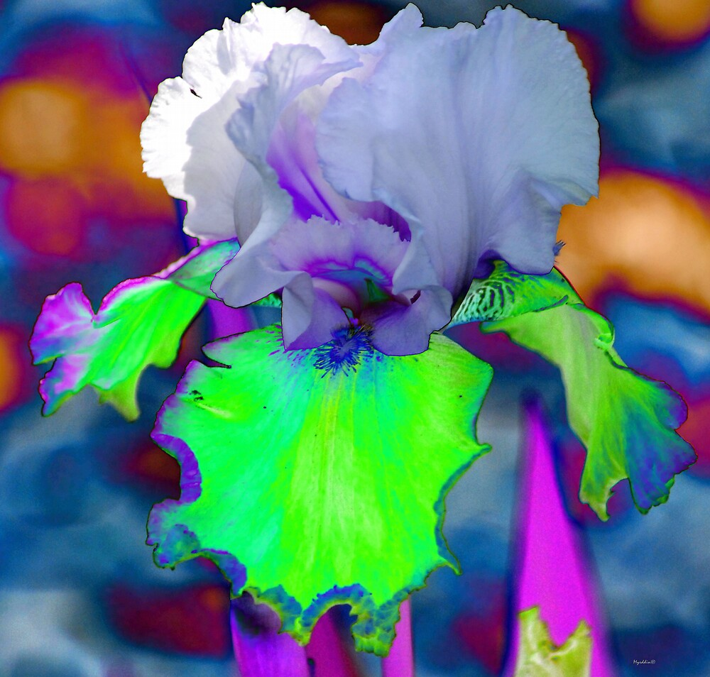 Abstract Flower by Myrddin