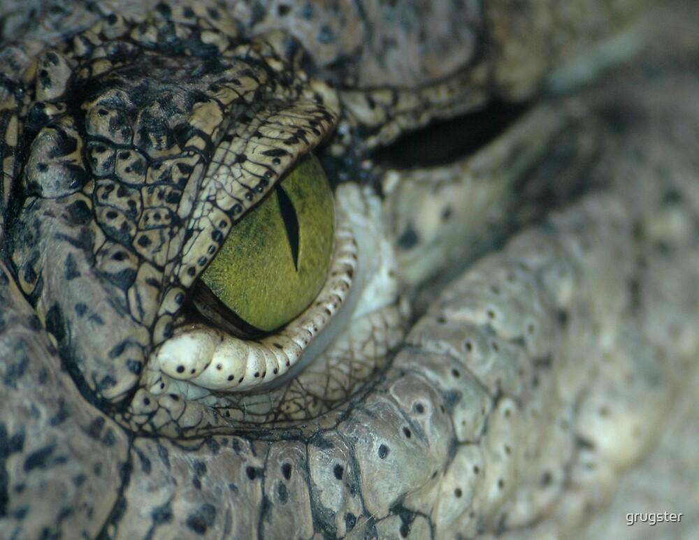 Aligator eye by grugster
