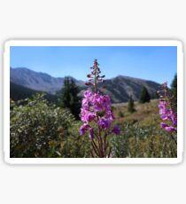 A-Basin Wildflower #1 Sticker