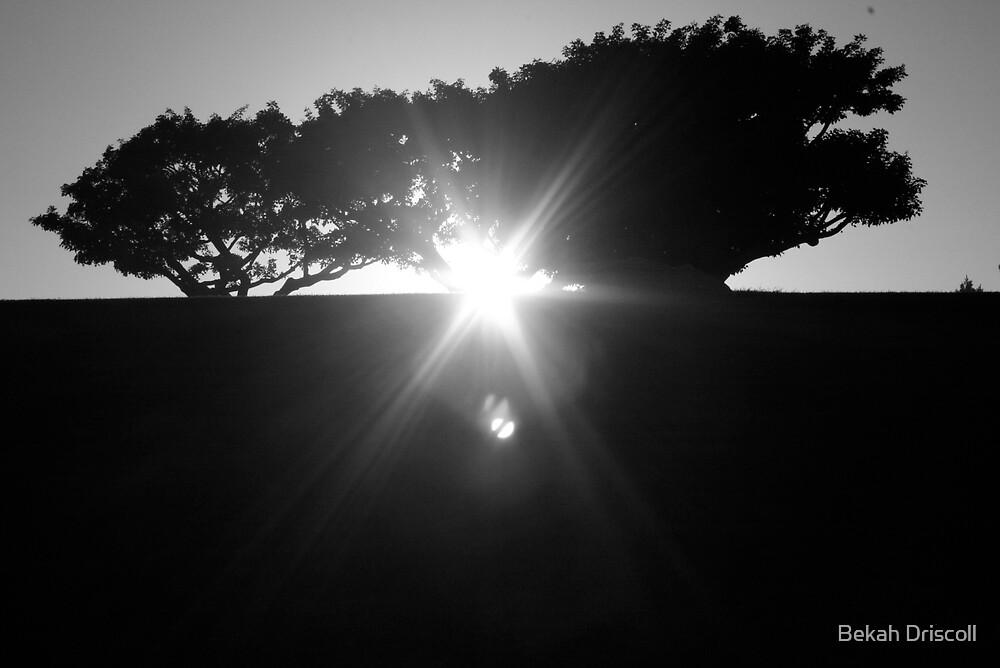 tree by Bekah Driscoll