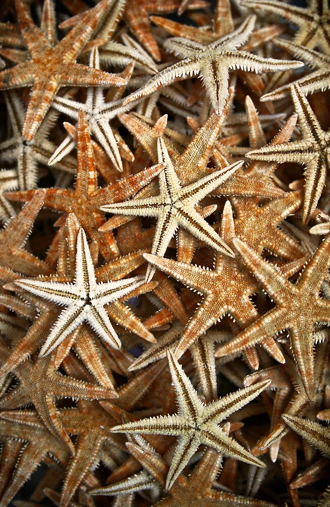 Starfishes by Filiz A