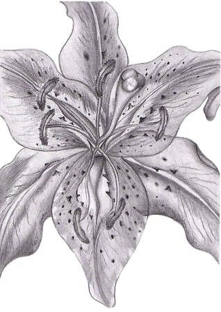 Flower Drawing by LiquidizeArt
