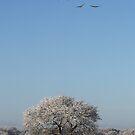 Winter geese by Peter Voerman