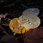 Fall Leaves by Rachel Jeffrey