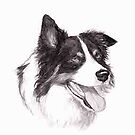 Border Collie by Charlotte Yealey