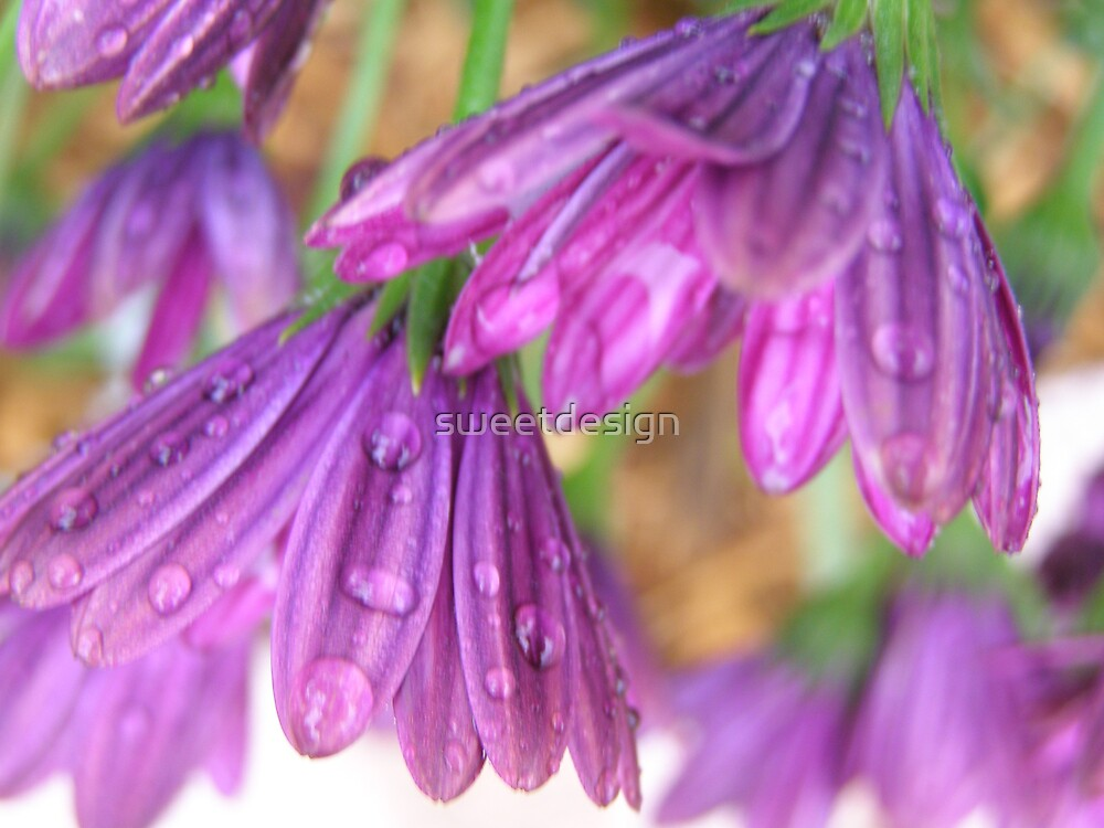 Purple Rain by sweetdesign