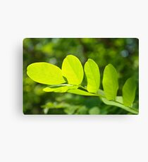 Leaf Structure Canvas Print