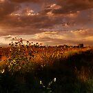 Colorado Farm Land II by Pamela Hubbard