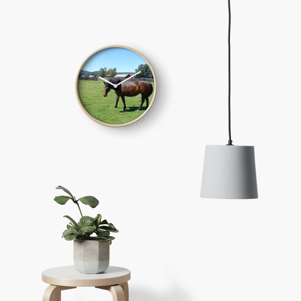 Horse. Beautiful horse image Clock
