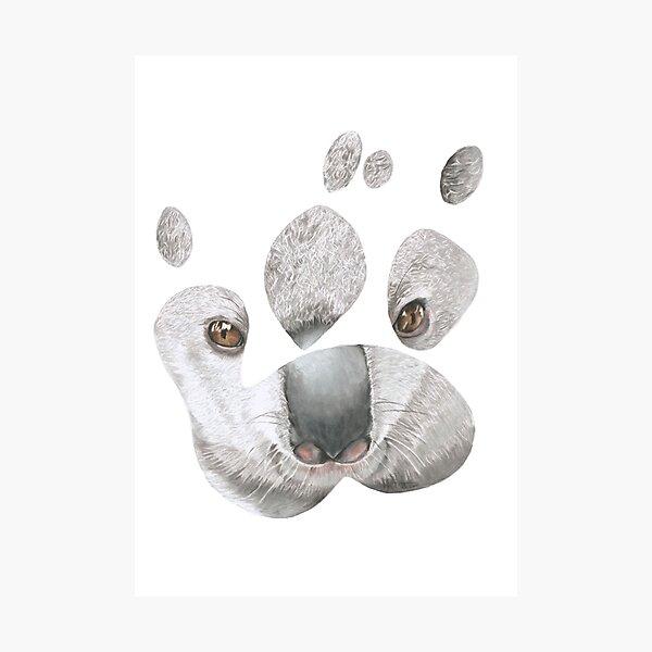 Koala paw print Photographic Print