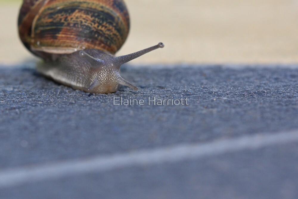 I Can See The Finish Line by Elaine Harriott