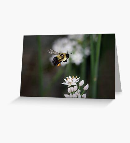 Bumble Bee in Flight Greeting Card