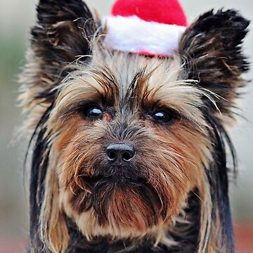 Yorkshire Terrier Christmas by EdmondHoggeJr