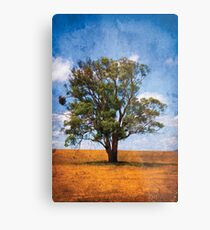 Surviving the Drought.... Metal Print