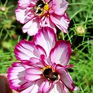 Two Bee or not Two Bee + Fly by AnnDixon