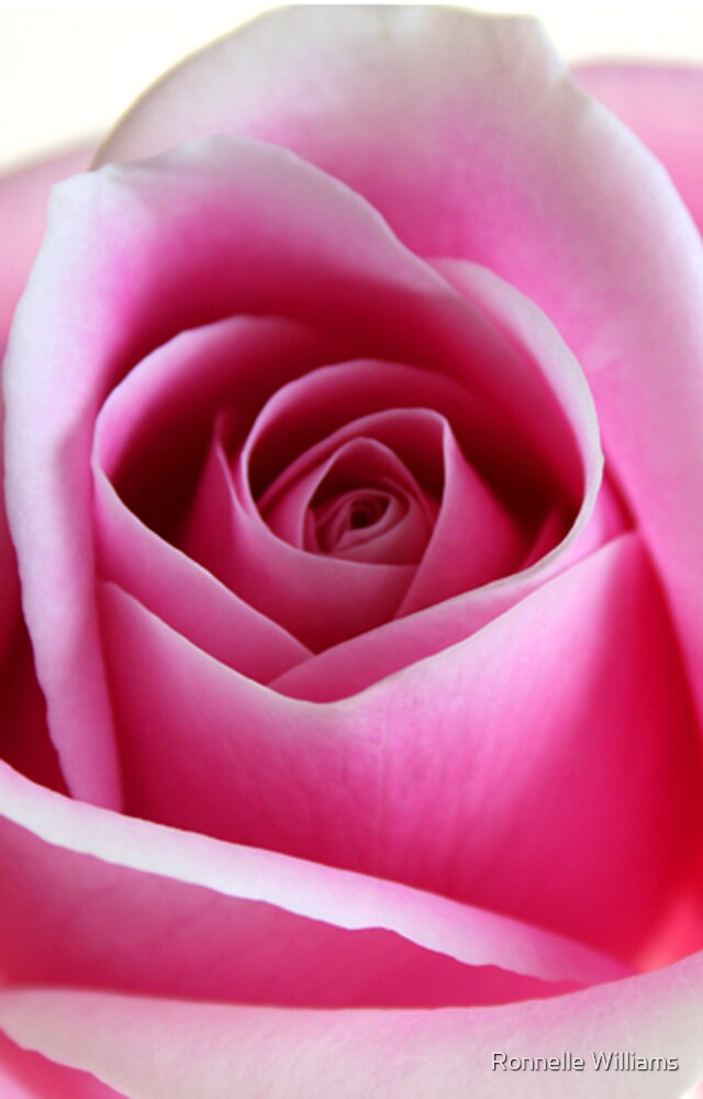 Rose bud by Ronnelle Williams
