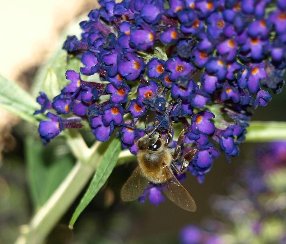 Buzzing by dawnlopez331