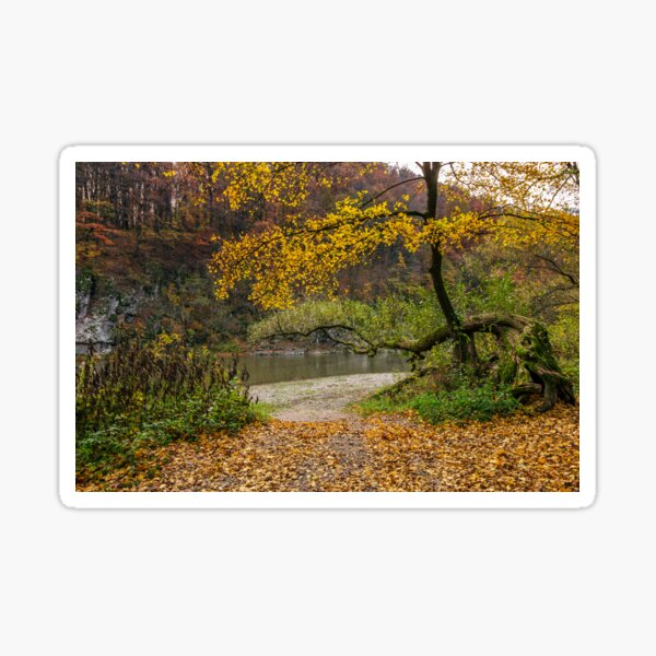 yellow trees on rocky shore of the river Sticker