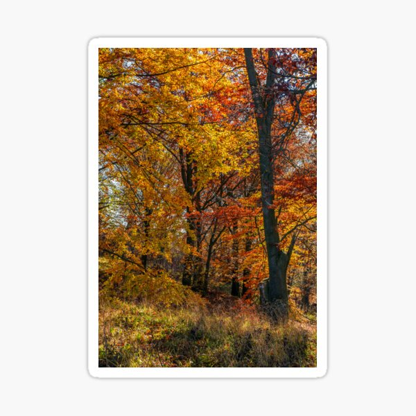 beautiful golden foliage on sunny day in forest Sticker