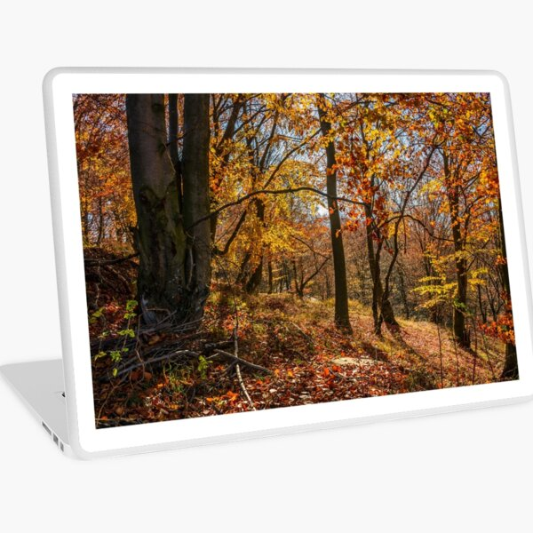 forest in golden brown foliage on sunny day Laptop Skin