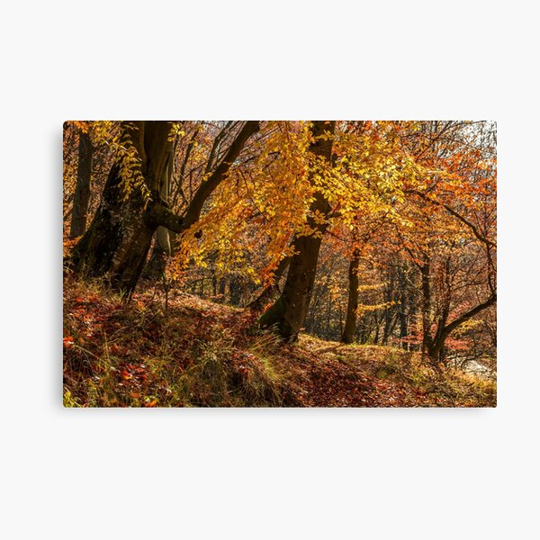 forest in golden brown foliage on sunny day Canvas Print