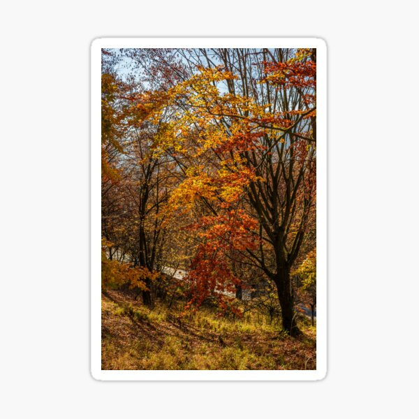 forest in golden brown foliage on sunny day Sticker