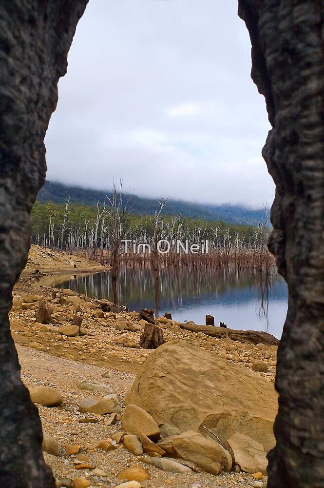 Lake Mackintosh through the eye of a burnt-out Stump. by Tim O'Neil