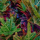 Variegated Vibrance by Chancelrie