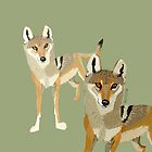 Wolves of the world: Canis lupus pallipes by belettelepink