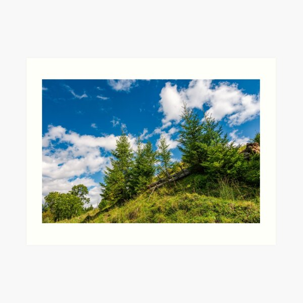 spruce trees on a slope under the blue sky Art Print