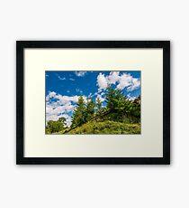 spruce trees on a slope under the blue sky Framed Print