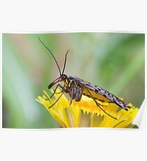 Scorpionfly Poster