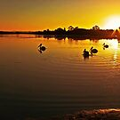 Pelicans Four by engride