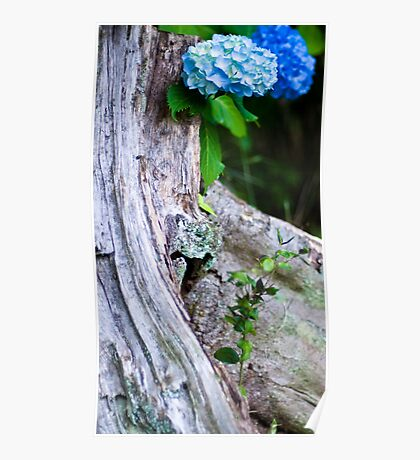 Hydrangea and Tree Trunk Poster