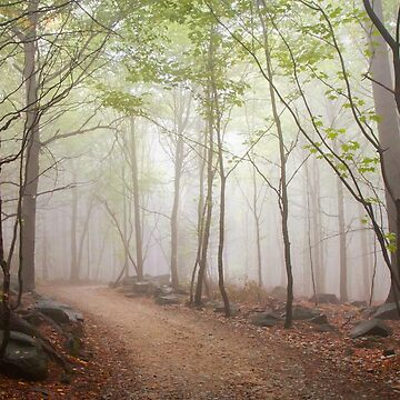 A Walk In The Foggy Forest by domcia