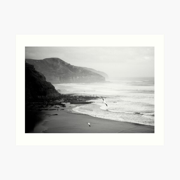 Gannets on Muriwai Beach. Art Print