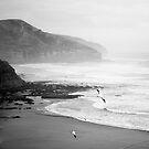 Gannets on Muriwai Beach. by VanOostrum