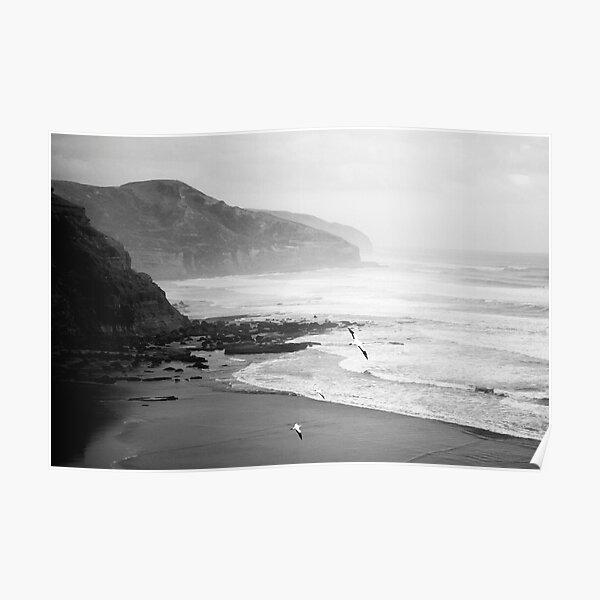 Gannets on Muriwai Beach. Poster