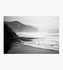 Gannets on Muriwai Beach. Photographic Print