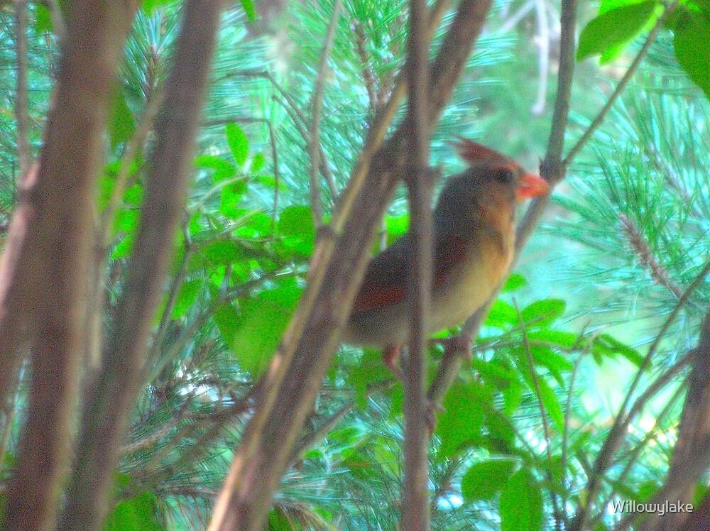 Lady Cardinal by Willowylake