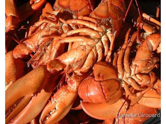 Lobster by Danielle Girouard