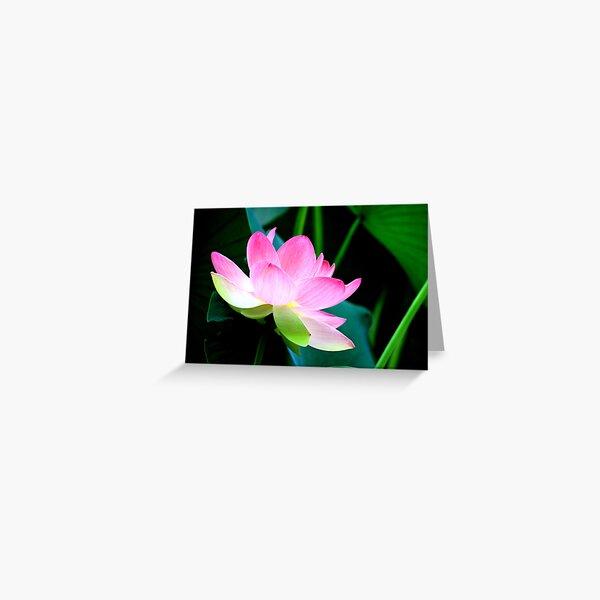 The Last Lotus Greeting Card