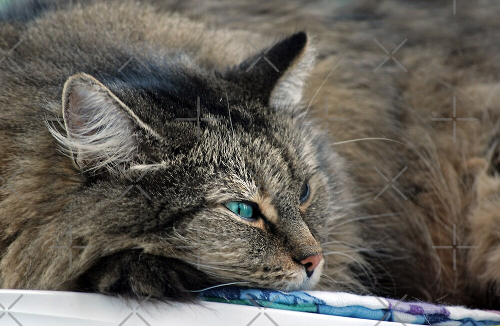Cat Nap by Maria Dryfhout